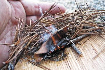023-fire-starting-methods-bow-drill-hand-drill-method